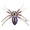 Purple Belly Spider Pin Brooch