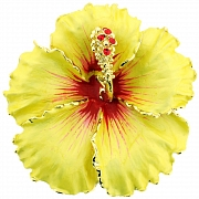 Yellow and Red Hawaiian Hibiscus Flower Brooch/Pendant (Chain Not Included)